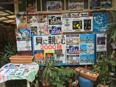 江ノ島さんぽちゃん