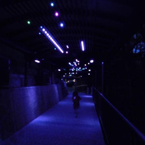 ロープウェイから展望台までの道